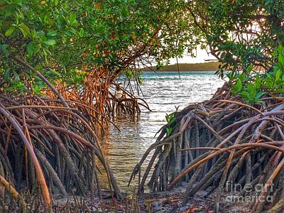 Photograph - Mangrove by Laura Forde