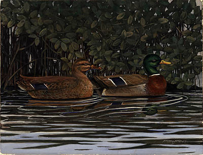 Mangrove Mallards Art Print by Timothy Tron