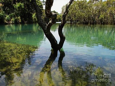 Photograph - Mangrove Mystique 3 by Dianne  Connolly