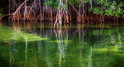 Mangrove Forest Photograph - Mangrove Reflections by Karen Wiles