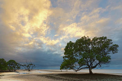 Photograph - Mangrove Tree At Low Tide by Robert Charity