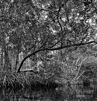 Photograph - Mangrove Trees, Commodore Creek, Sanibel Island, Fl  50464-bw by John Bald