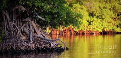 Mangroves Of Roatan Art Print by Doug Sturgess