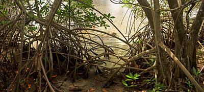 Mangroves On New River Art Print by Matt Tilghman
