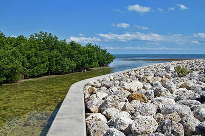 Photograph - Mangroves Rocks And Ocean by Bob Slitzan