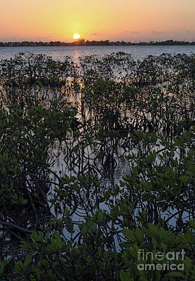Photograph - Mangroves Sunset, Big Pine Key, Florida  -45562 by John Bald