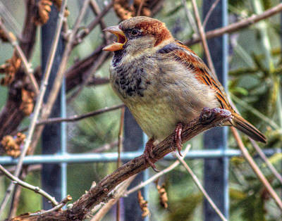 Photograph - Manhattan Is For The Birds by Jeff Stallard