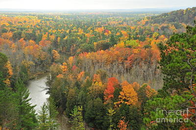 Manistee River Autumn Forests Art Print