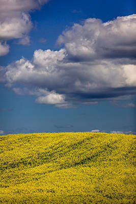 Best Photograph - Manitoba Canola by Gary Migues