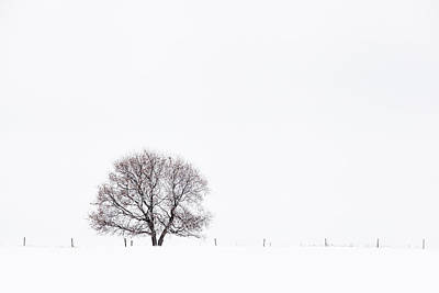 Photograph - Manitoba Winter by Yvette Van Teeffelen