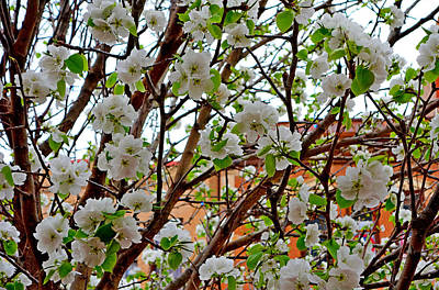 Photograph - Manitou Springs Blossoms by Robert Meyers-Lussier