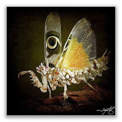 Mantis 24 Art Print by Ingrid Smith-Johnsen