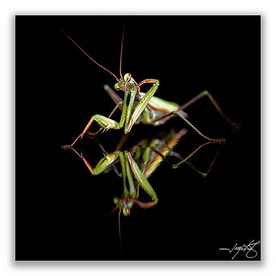 Mantis 25 Art Print by Ingrid Smith-Johnsen