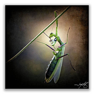 Mantis 26 Art Print by Ingrid Smith-Johnsen