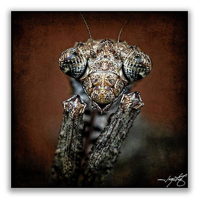 Mantis 31 Art Print by Ingrid Smith-Johnsen