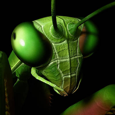 Digital Art - Mantis Head by Matt Lindley