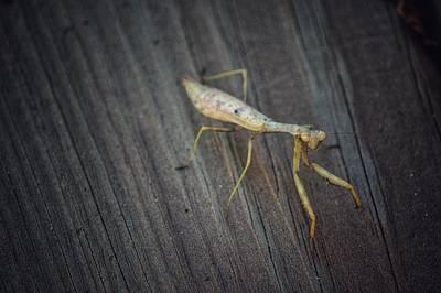 Photograph - Mantis  by Joseph Caban