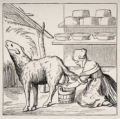 Switzerland Drawing - Manufacture Of Cheeses In Switzerland by Vintage Design Pics