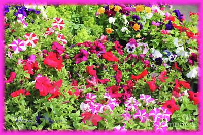 Digital Art - Petunias And Pansies by Donna L Munro