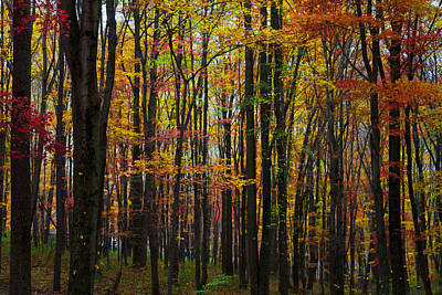 Art Print featuring the photograph Many Colors Of Autumn by April Reppucci