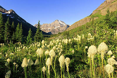 Photograph - Many Glacier Bear Grass by Jack Bell