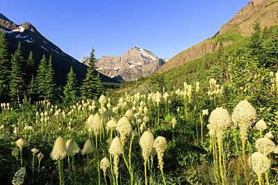 Photograph - Many Glacier Bear Grass by Jack Bell