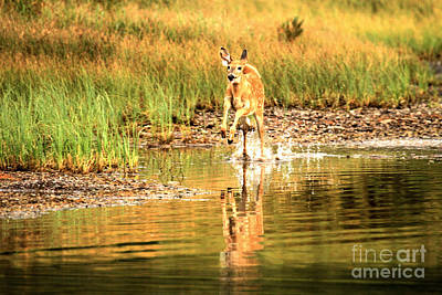 Photograph - Junior Dashing Through The Water by Adam Jewell