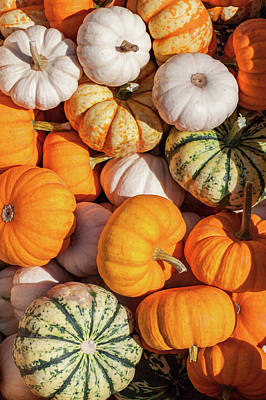 Photograph - Many Gourds by Todd Klassy