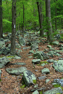 Photograph - Many Of Rocks In Maryland On The At by Raymond Salani III