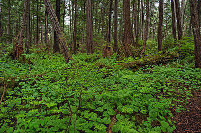 Photograph - Many Shades Of Green - Rainforest Trail - Juneau Alaska by Cathy Mahnke