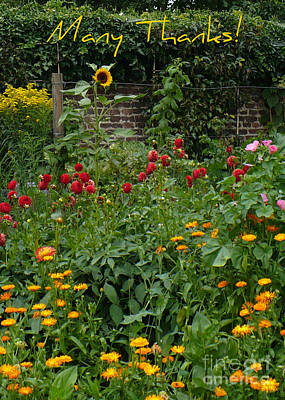 Gardens Greeting Card - Many Thanks Card by Carol Groenen