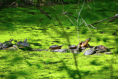 Photograph - Many Turtles Along The Appalachian Trail by Raymond Salani III