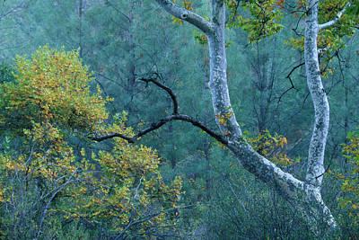 Manzana Trail - San Rafael Wilderness Art Print