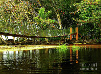 Swamp Thing Photograph - Manzanillo Swinging Bridge by Norma Brandsberg