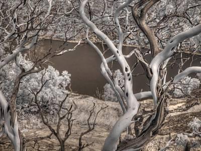 Manzanita Photograph - Manzanita Hetch Hetchy by Jane Linders