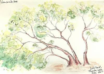 Painting - Manzanita Tree by Maria Langgle