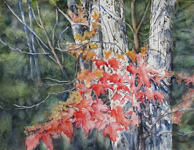 Painting - Maple And Birch -new England  Fall by June Conte  Pryor