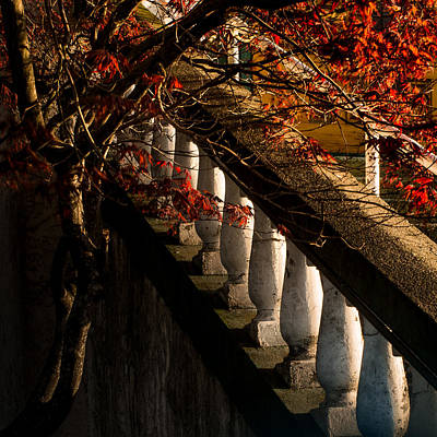 Photograph - Maple And Concrete by Brad Koop