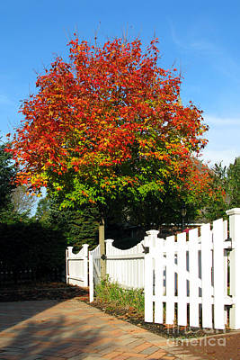 Autumn Scene Photograph - Maple And Picket Fence by Olivier Le Queinec