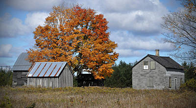Photograph - Maple And Rust by Tim Nyberg