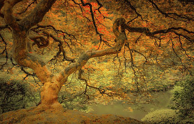 Photograph - Maple Brilliance by Don Schwartz