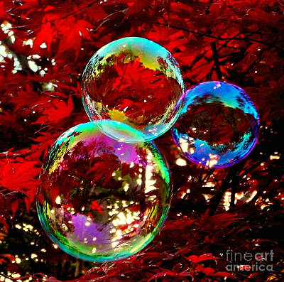 Photograph - Maple Bubble by Beth Ferris Sale