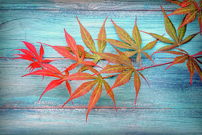 Photograph - Maple Colors by Philippe Sainte-Laudy