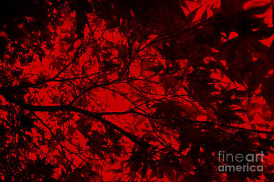 Photograph - Maple Dance In Red Velvet by Paul Cammarata