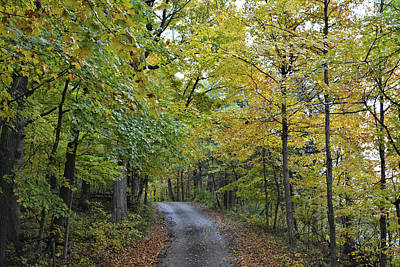 Photograph - Maple Drive 2 by Bonfire Photography