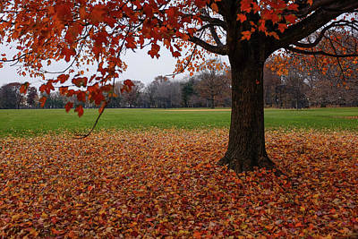 Photograph - Maple Droppings by Cornelis Verwaal