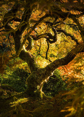 Photograph - Maple Fairytale by Bjorn Burton