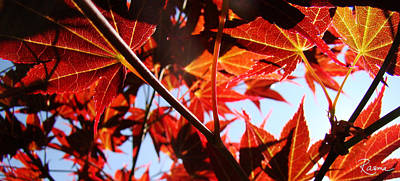 Photograph - Maple Fire by Rasma Bertz