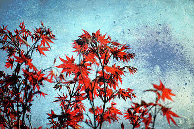 Photograph - Maple Frenzy by James Barber