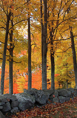 Photograph - Maple Glory by Michael Friedman